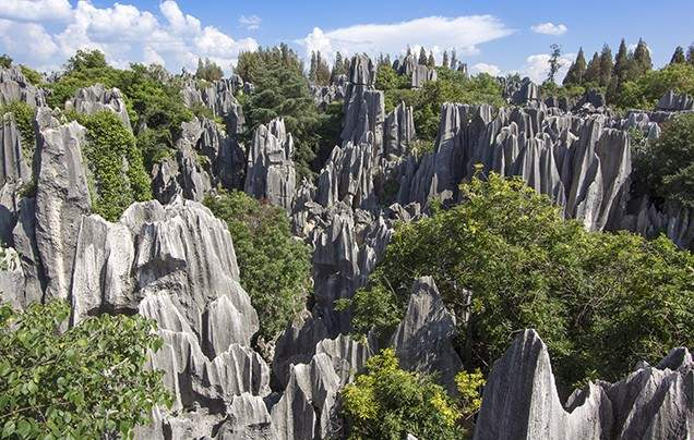 DAY 11: THE STONE FOREST