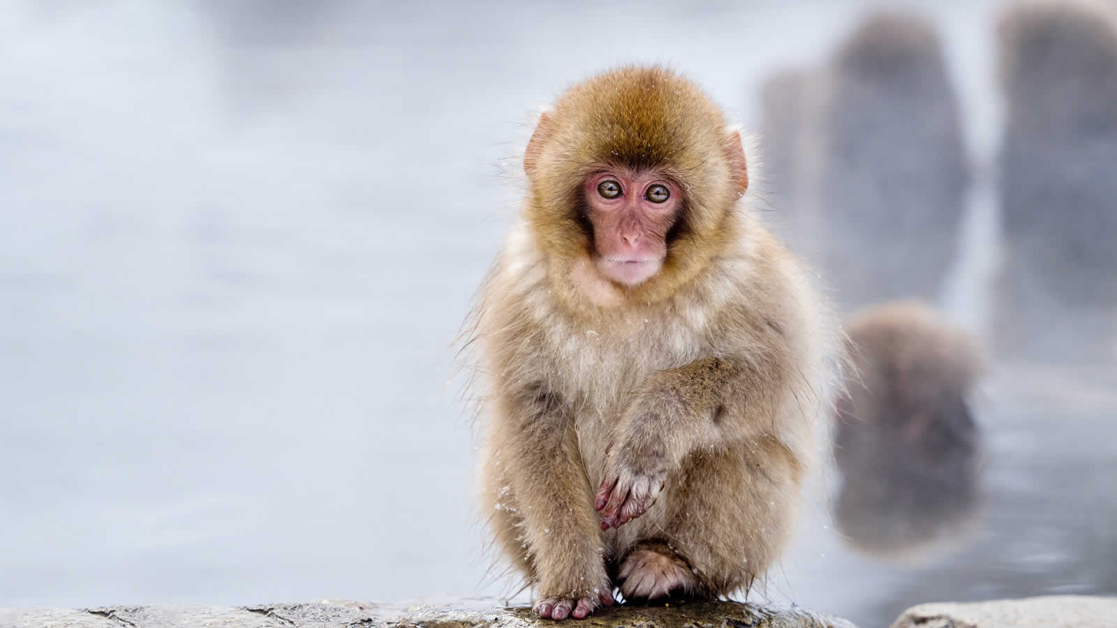 Sapporo & Snow Monkeys Tour | Wendy Wu Tours