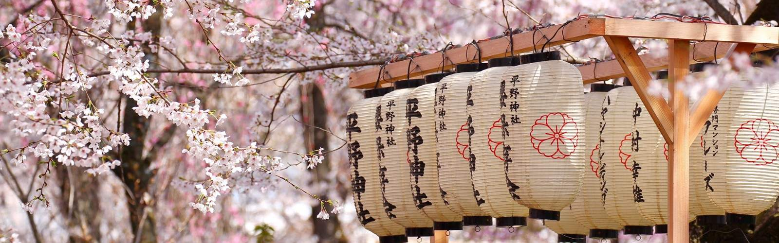 Times News Cherry Blossom Tour 2020 Tour | Wendy Wu Tours