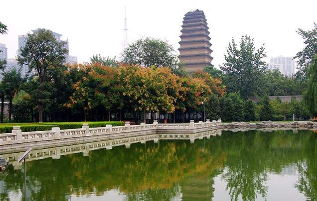 DAY 11: LITTLE WILD GOOSE PAGODA